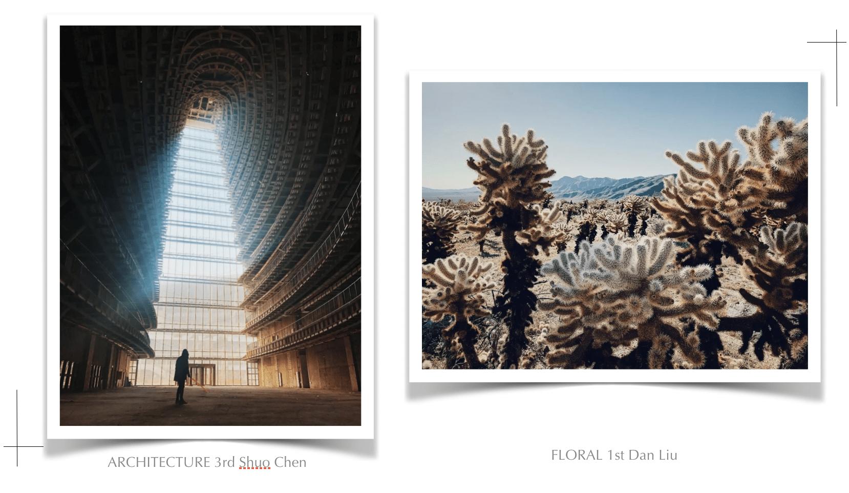 |愛上單眼攝影|攝影師的成長視野:IPPA 全球手機攝影大賽 2019 獲獎作品
